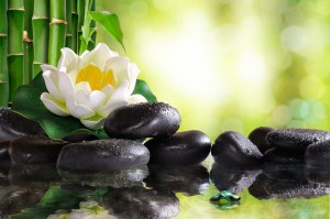 Water lily on lots of black stones reflected in water in nature. With bamboo and green background bokeh. Concept of calm and relaxation. Alternative treatments massage balance and meditation. Horizontal composition.